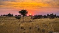 Kalahari Desert, Bagatelle Kalahari Game Ranch, Namibia
