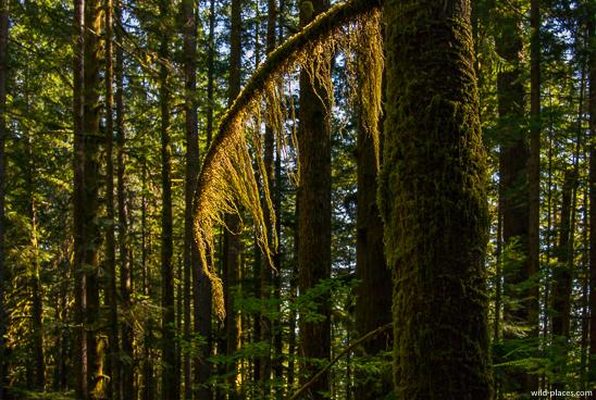Goldstream Falls, Goldstream Provincial Park, BC, Canada
