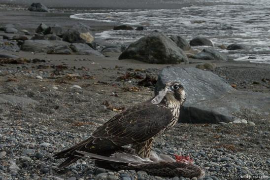 Sombrio Beach, Juan de Fuca Provincial Park, Vancouver Island, BC, Canada